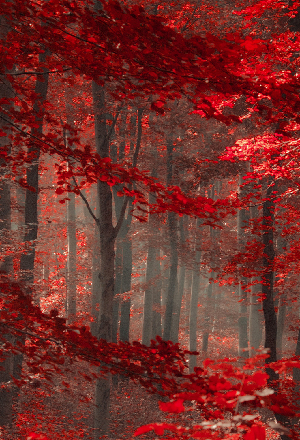 Red Forest 3Wallpapers iPhone paralllax Red Forest