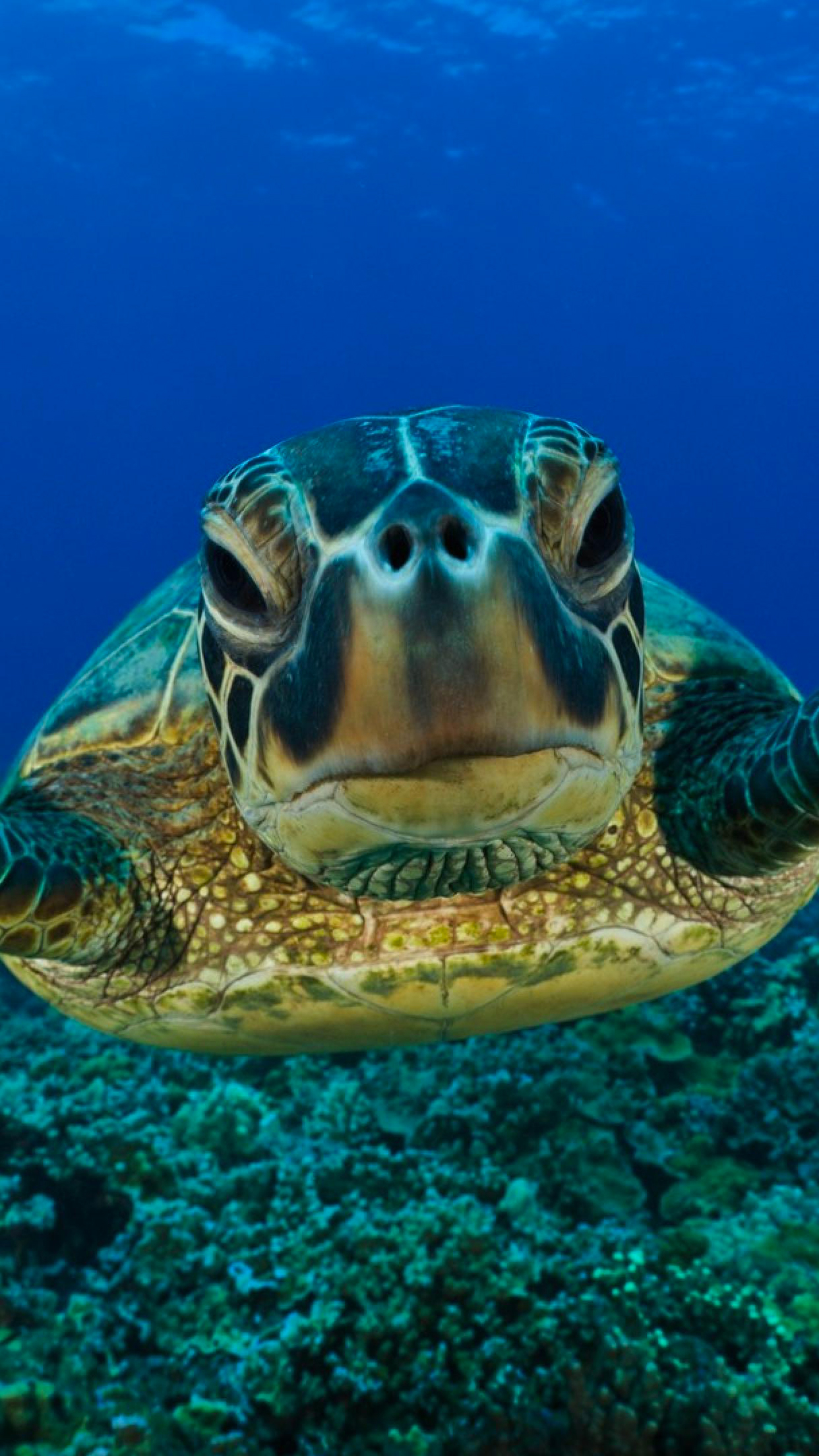 Turtle face iPhone 3Wallpapers Parallax Turtle face
