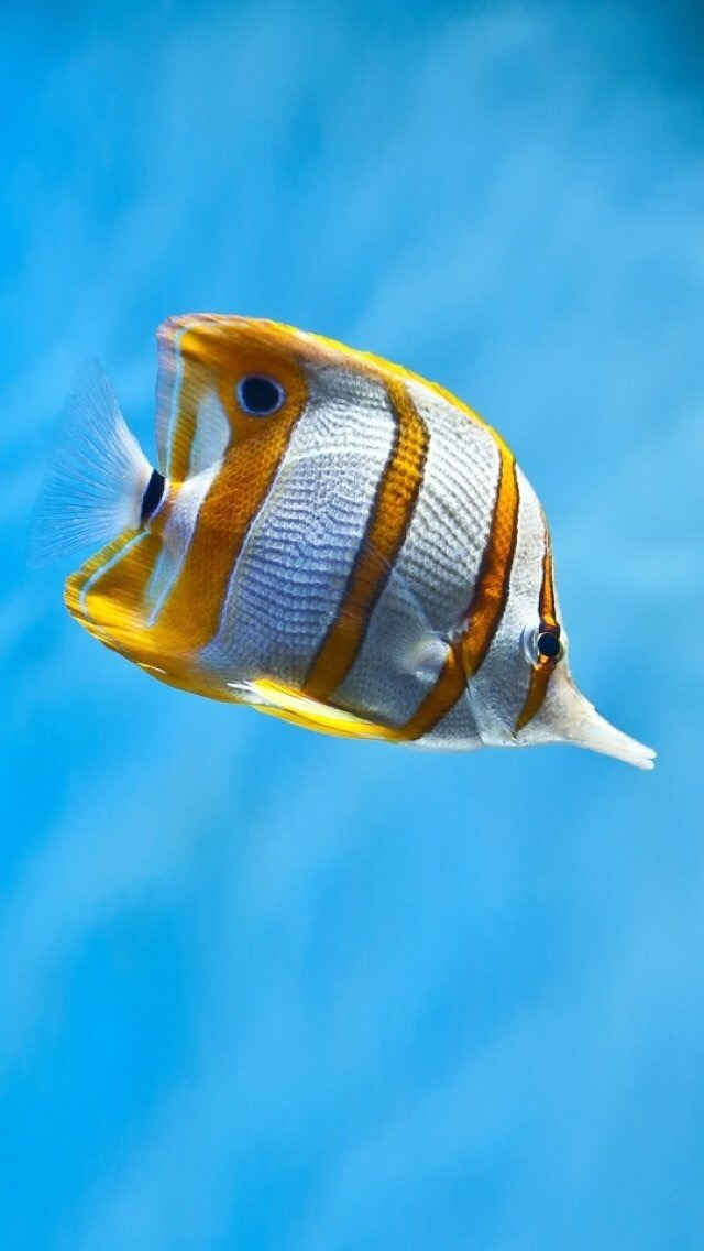Poisson Poisson 3 3Wallpapers iPhone Parallax Fish 3