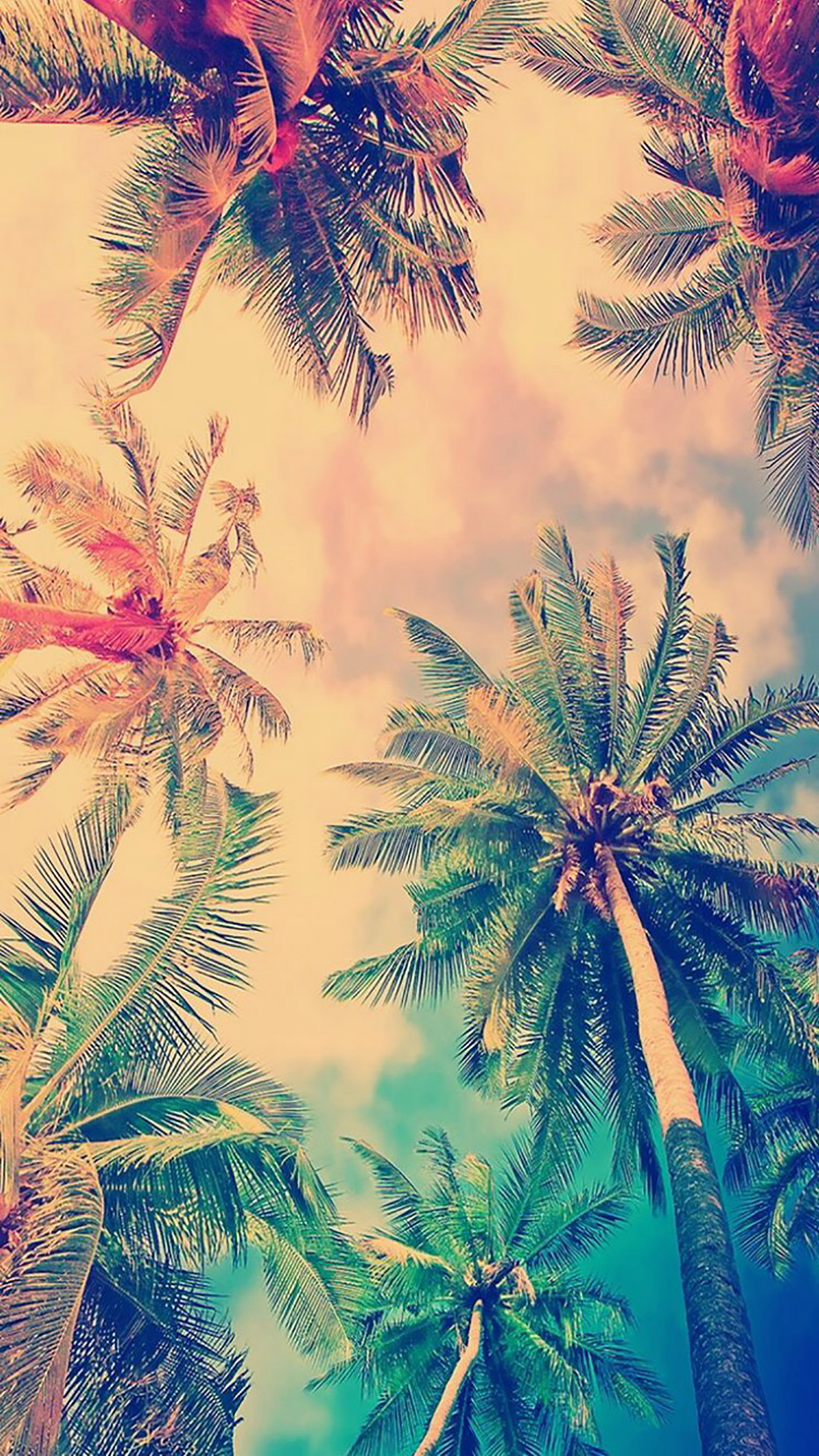 Coconut Palm 1 3Wallpapers iPhone Parallax Coconut Palm : 1