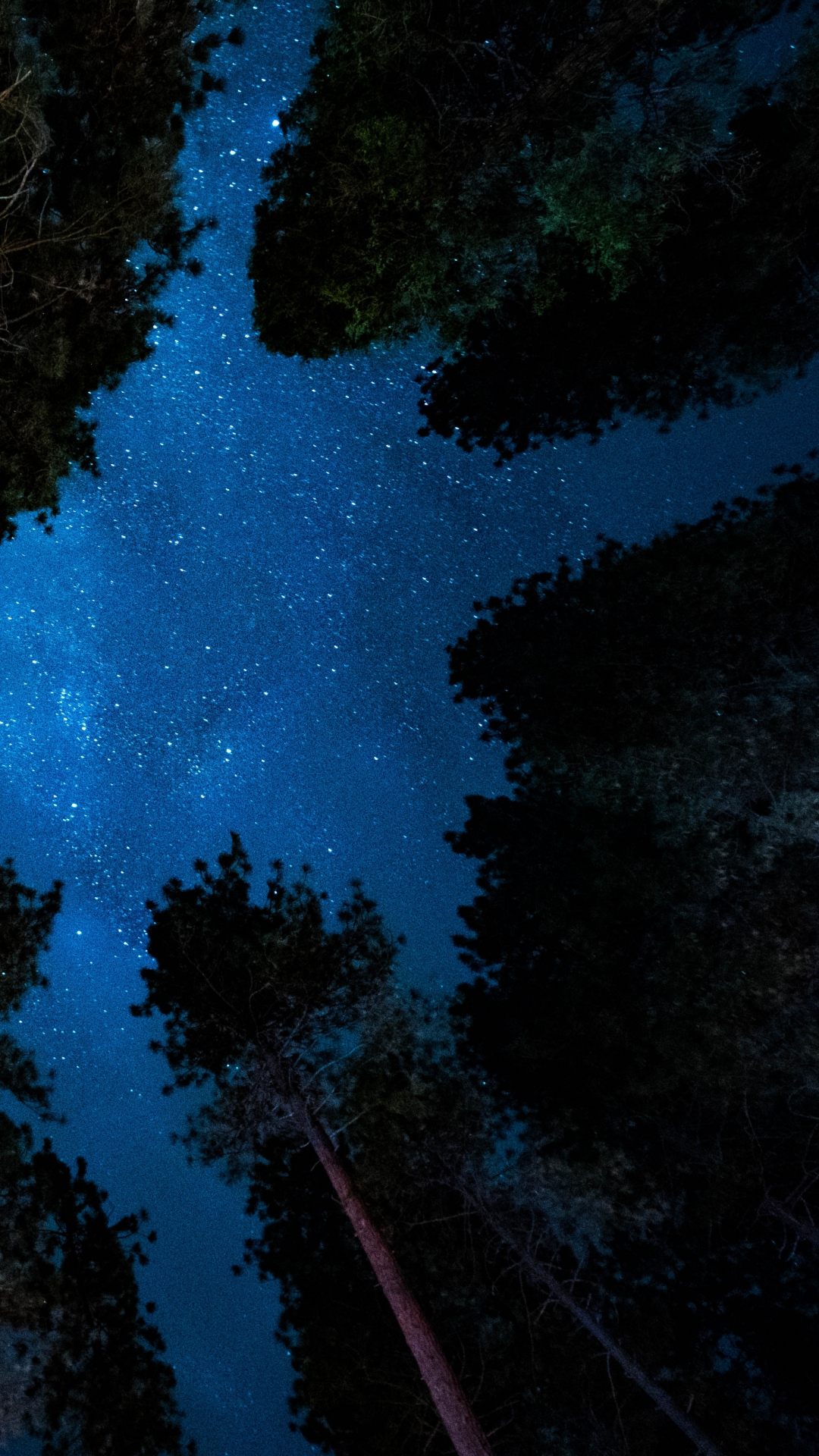 starry sky night trees Forest
