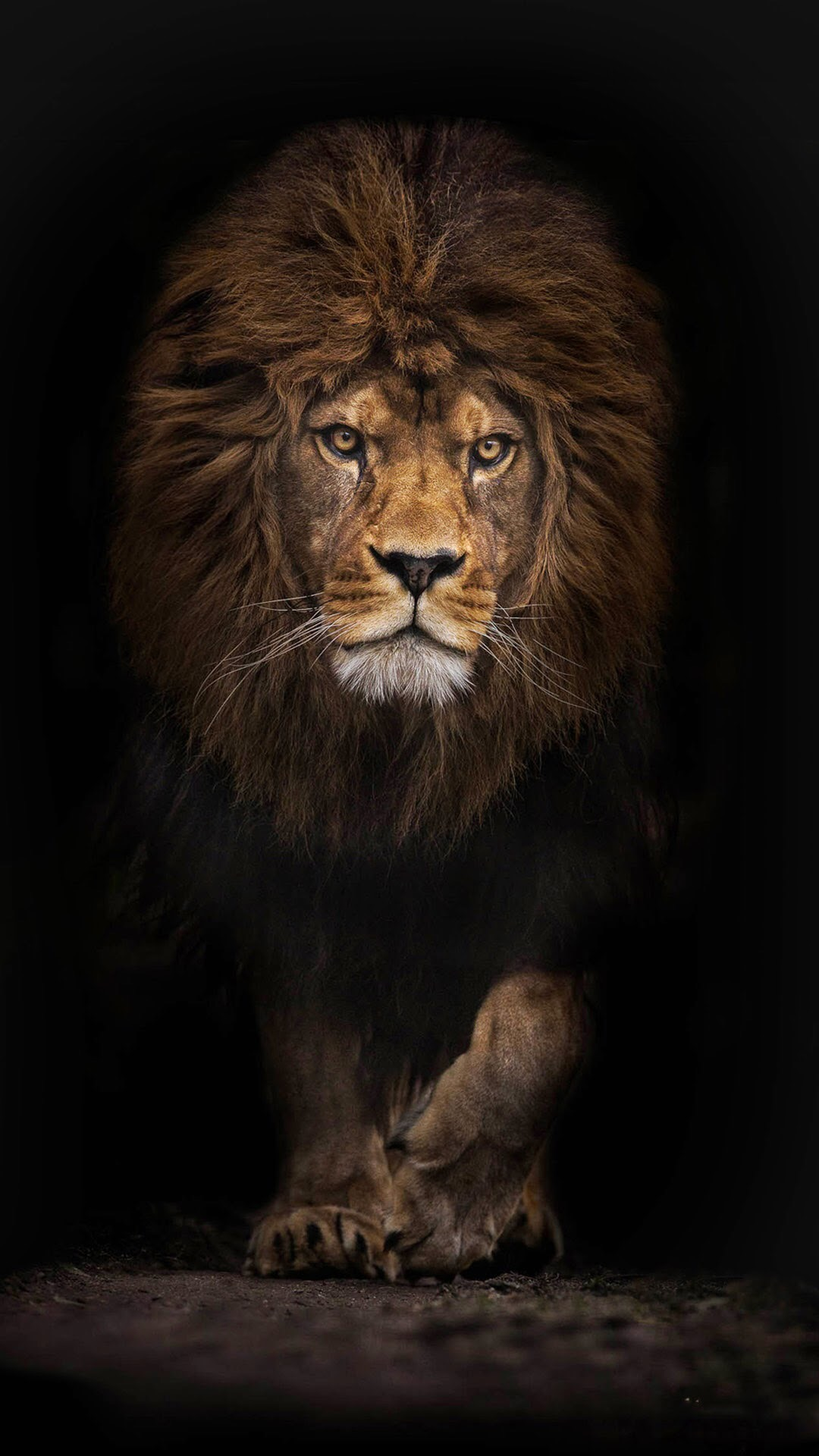 iPhone wallpaper lion1 Lion