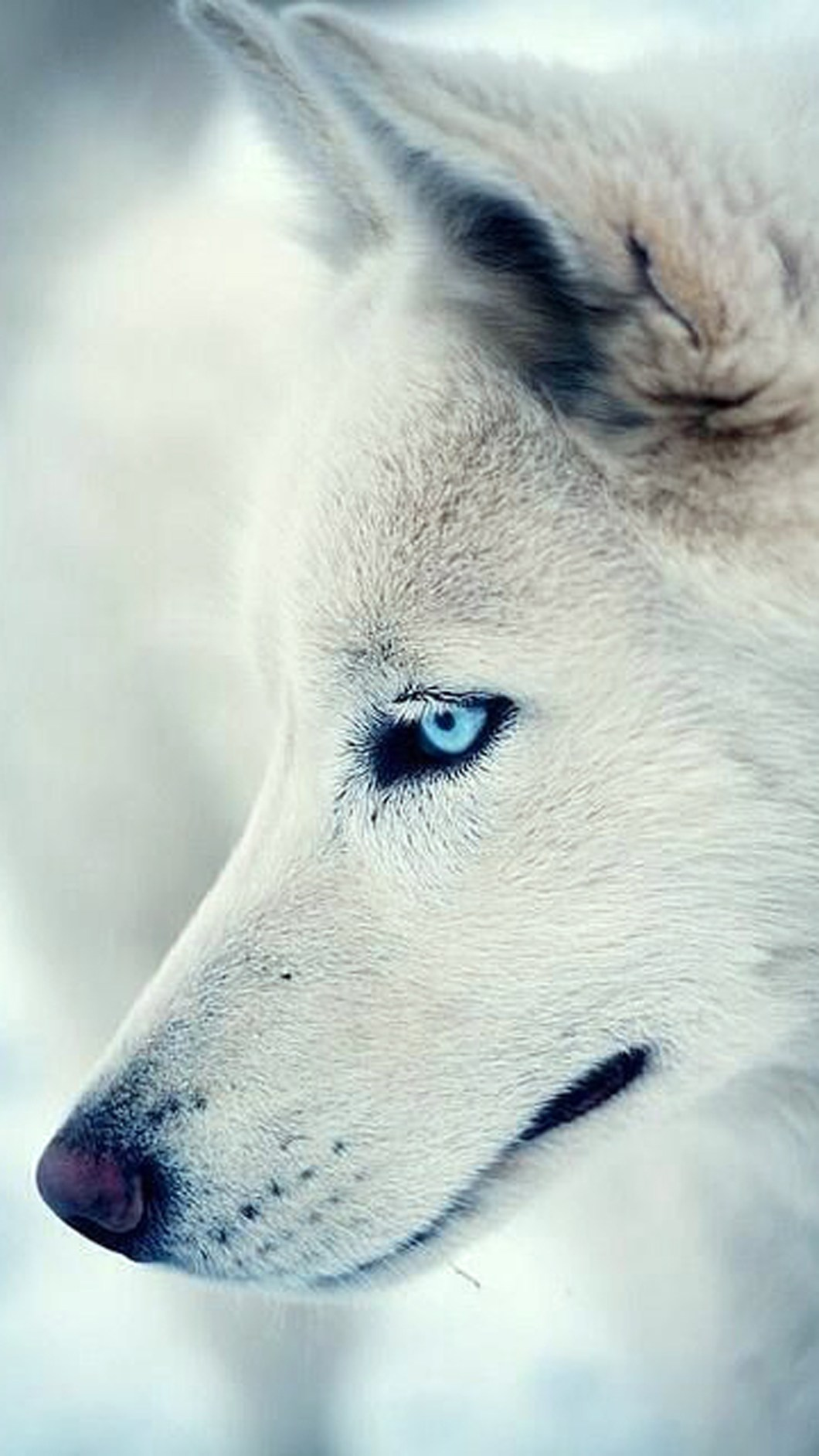 Wolf Wallpapers For Iphone X Bestpicture1 Org