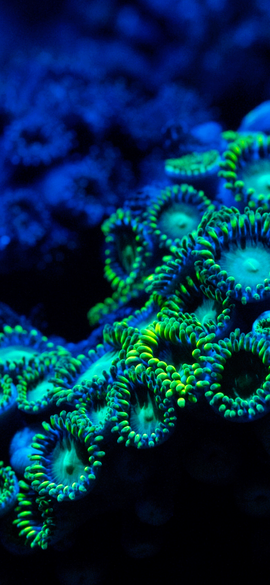 iPhone wallpaper coral reef 1 Coral Reef