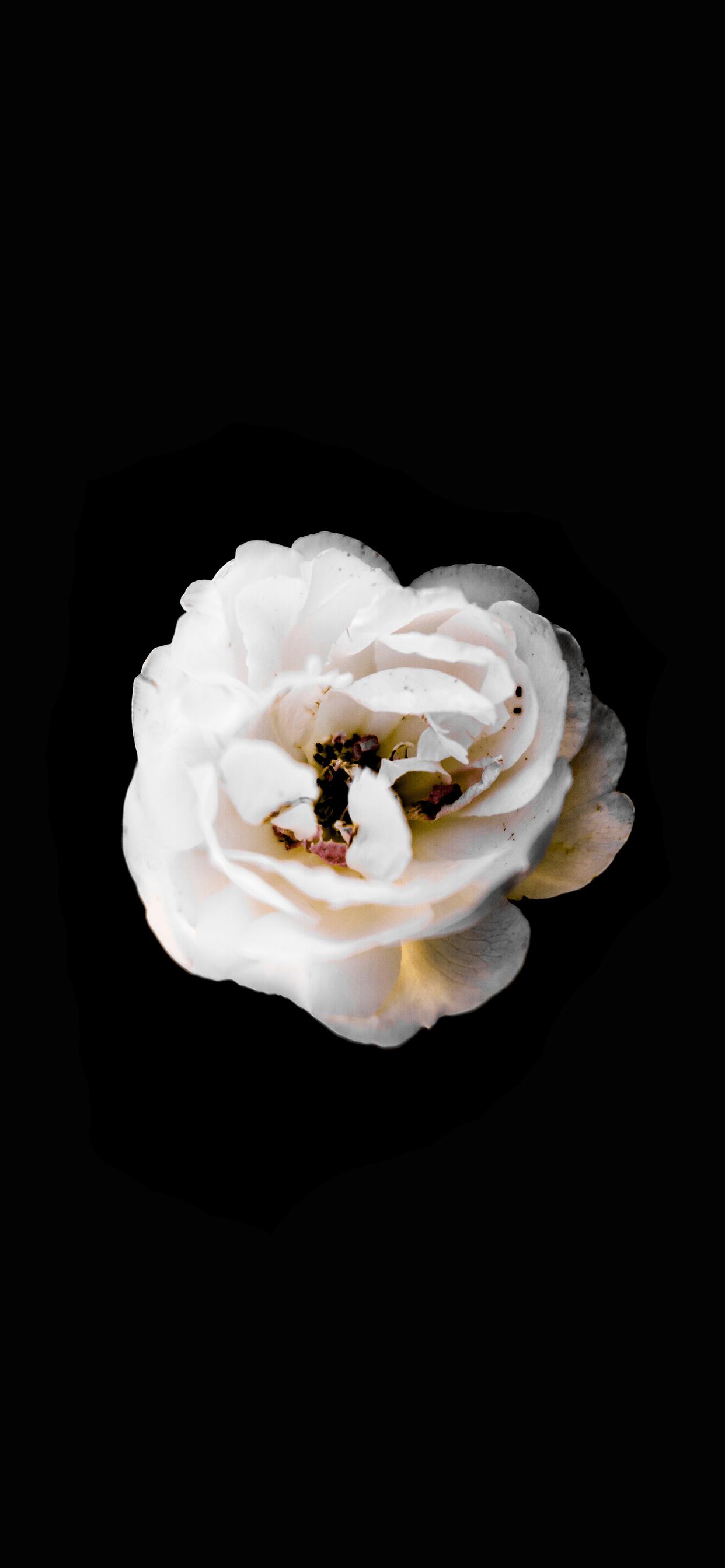 iPhone wallpaper black background flower Black