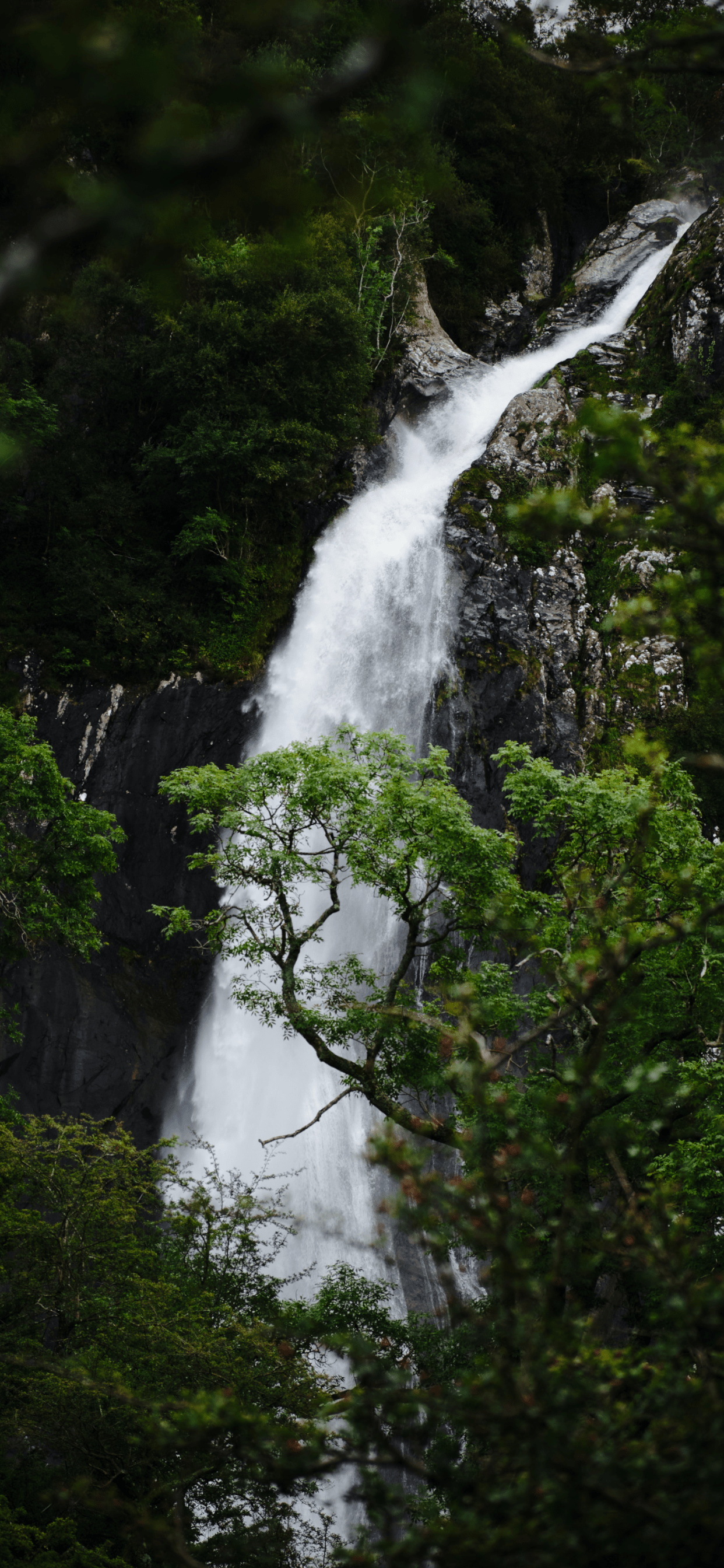 iPhone wallpapers jungle snowdonia national park Jungle