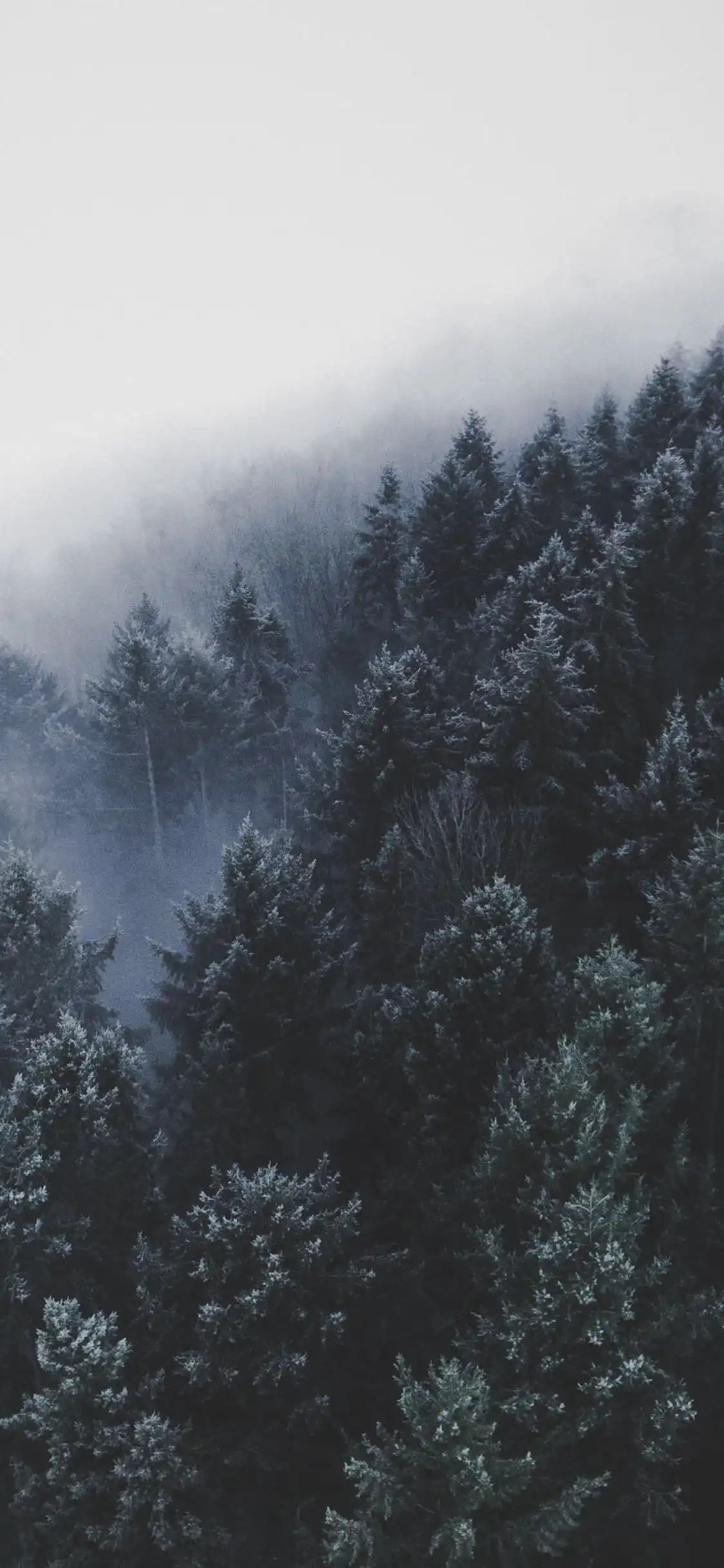 iPhone wallpapers forest fog brown Forest