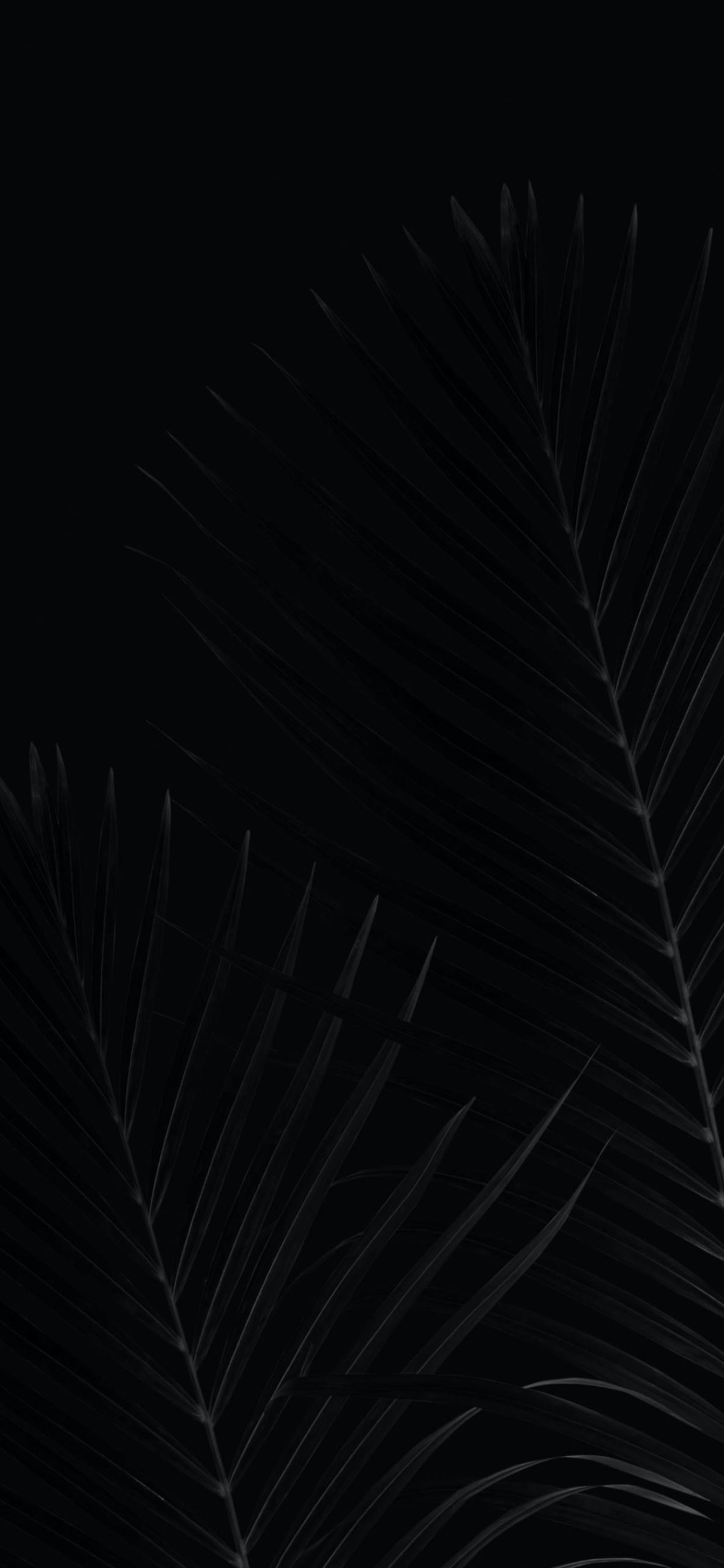 iPhone wallpapers black palm scaled Black