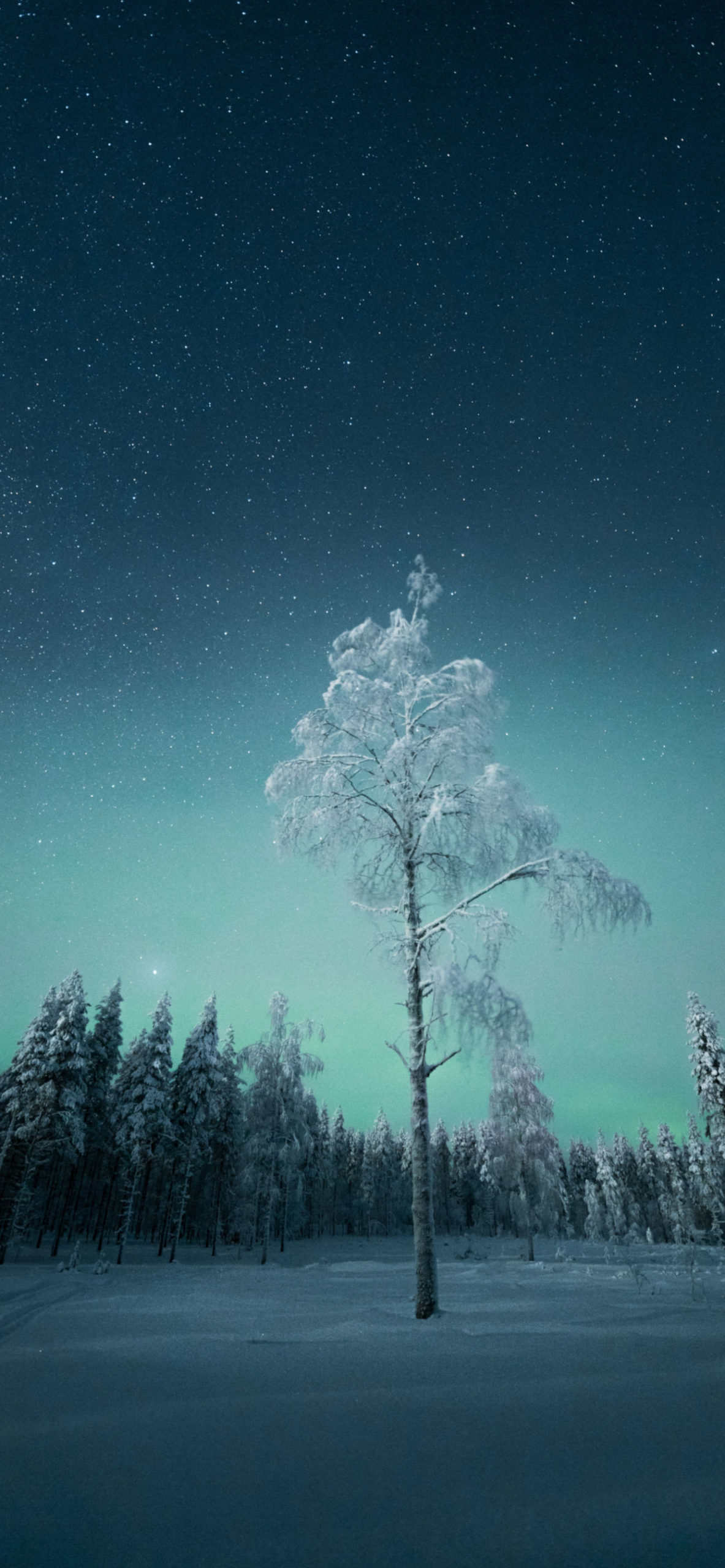 iPhone wallpapers northern lights tree scaled Northern Lights