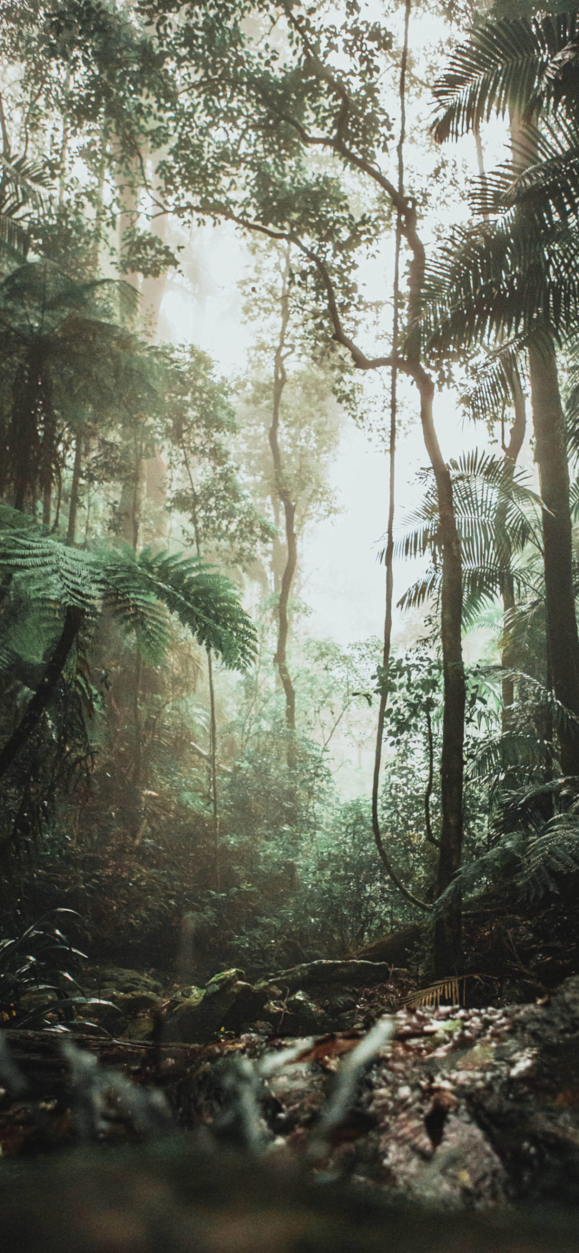 iPhone wallpapers jungle down view scaled Jungle