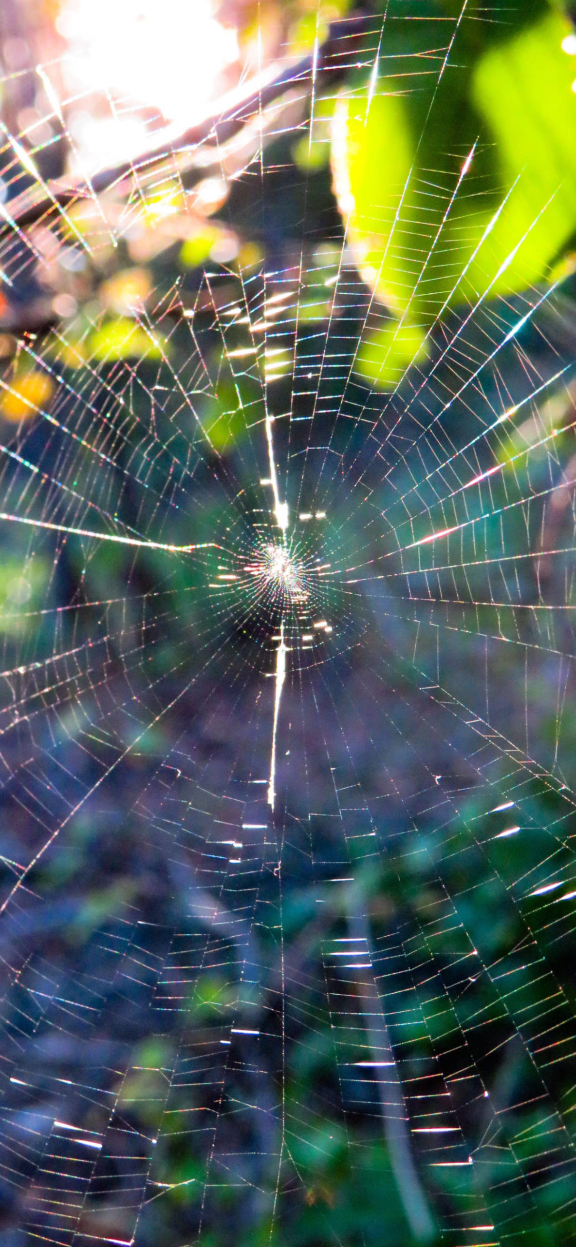 iPhone wallpapers spiderweb complete scaled Spider web