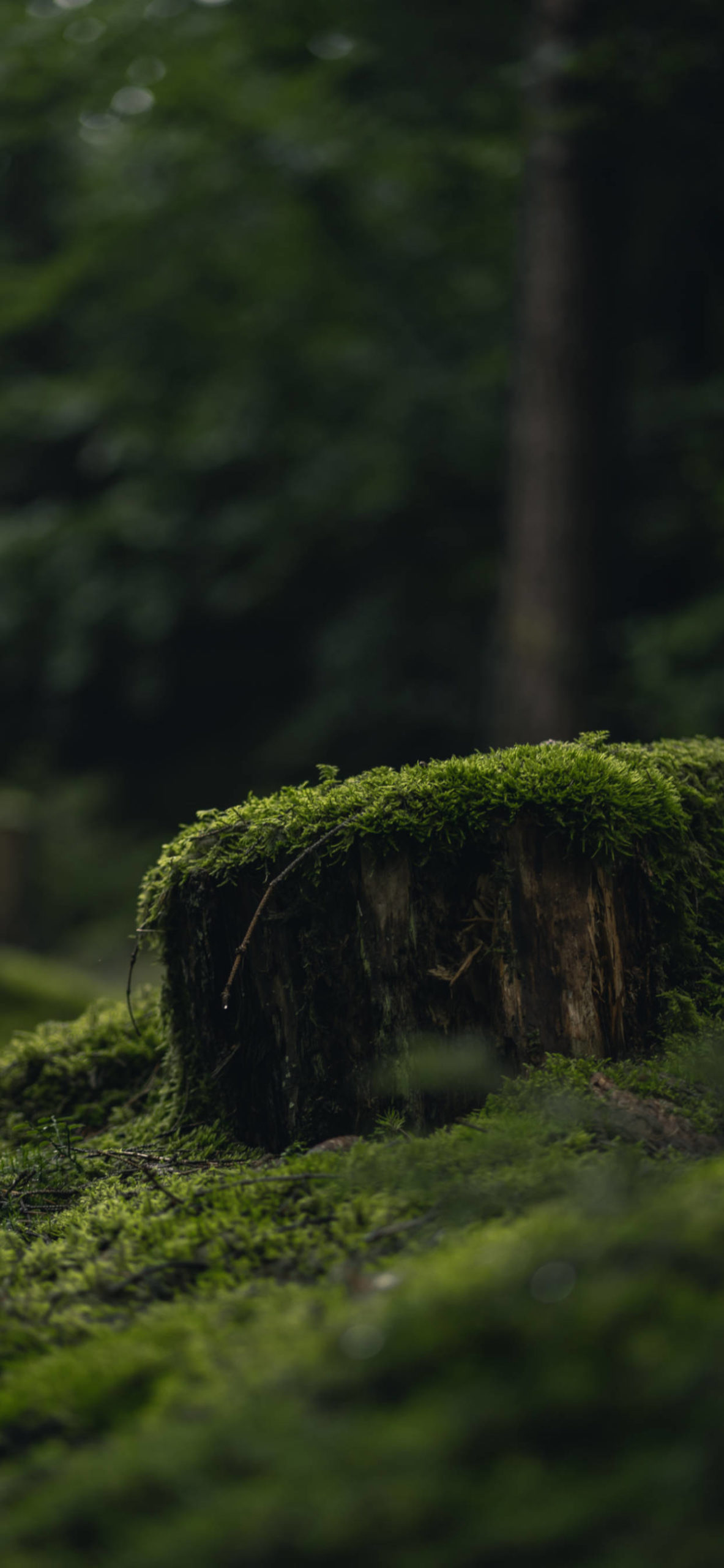 iPhone wallpapers moss forest ground scaled Moss