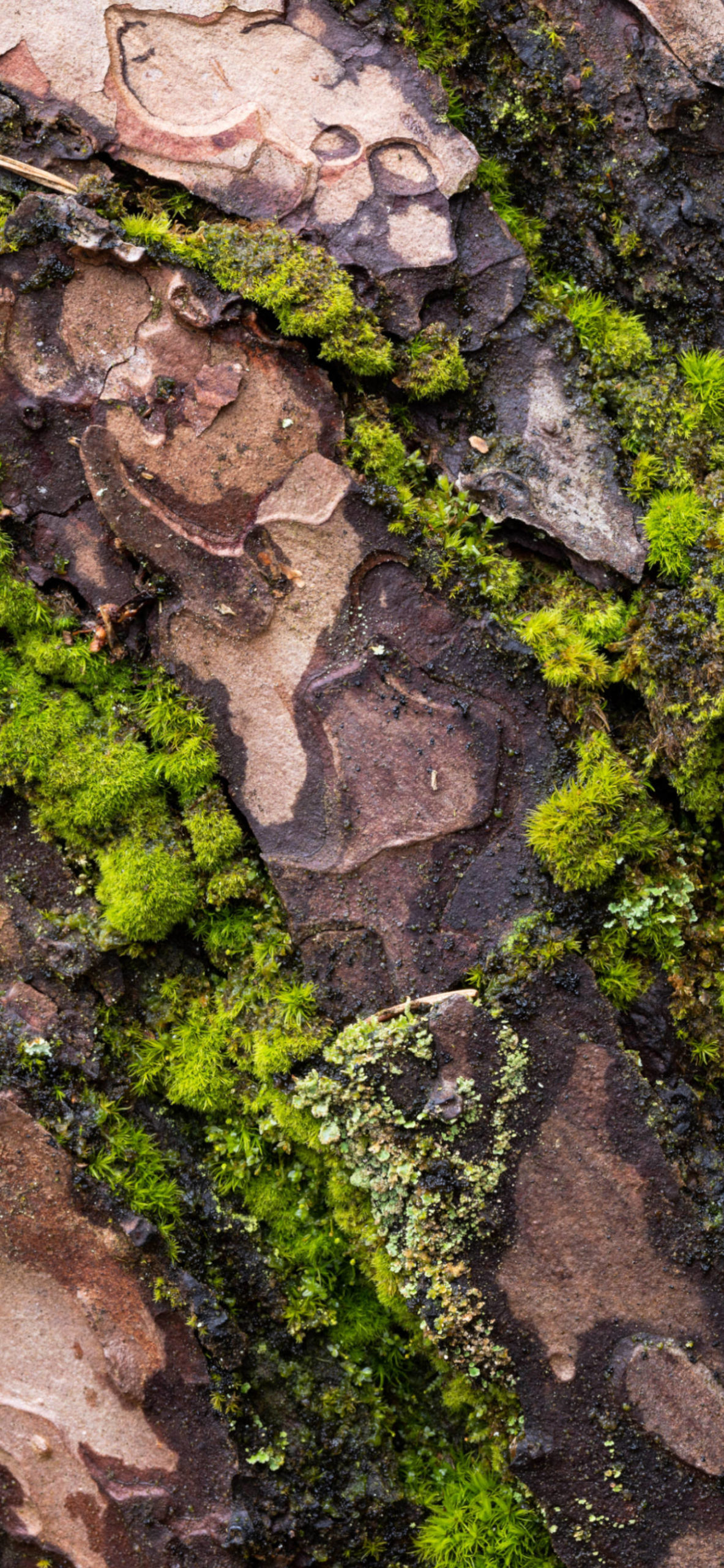 iPhone wallpapers moss rock scaled Moss