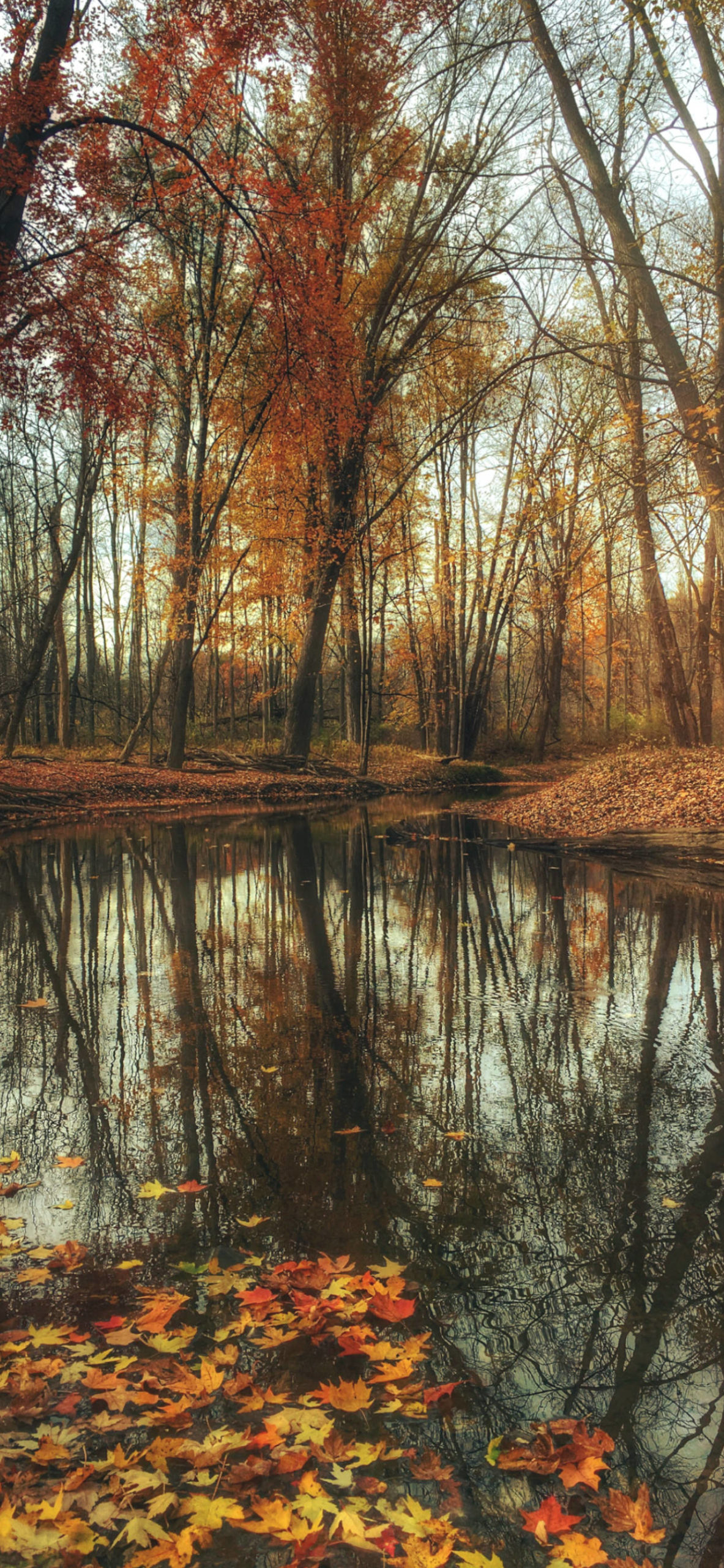 iPhone wallpapers autum river trees scaled Autumn