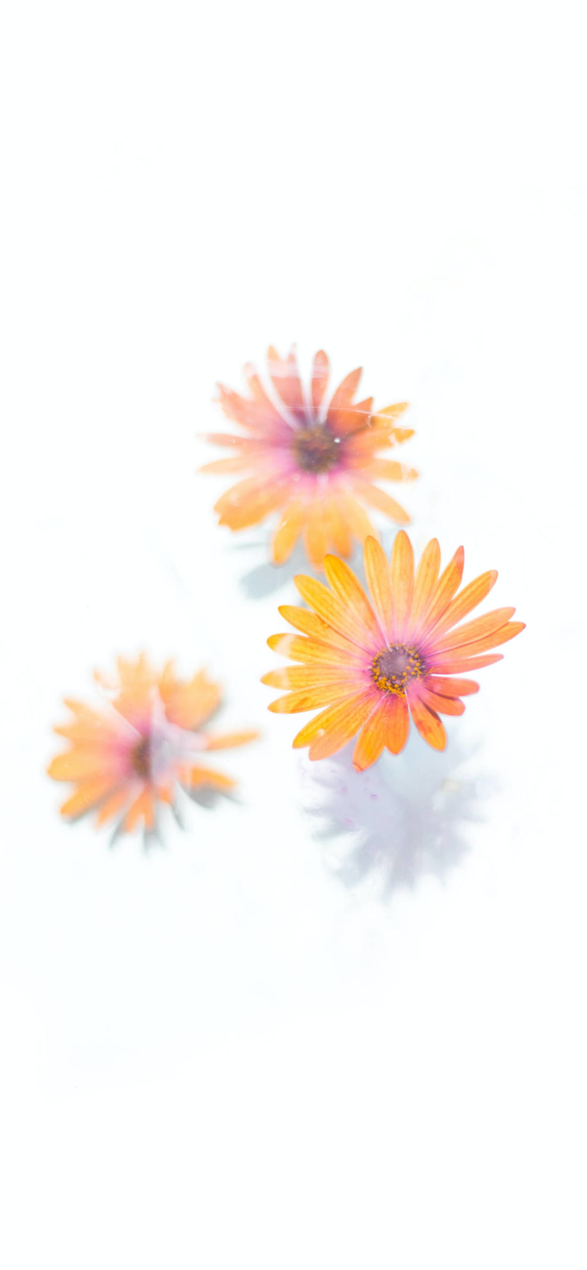 iPhone wallpapers flowers yellow orange scaled Flowers