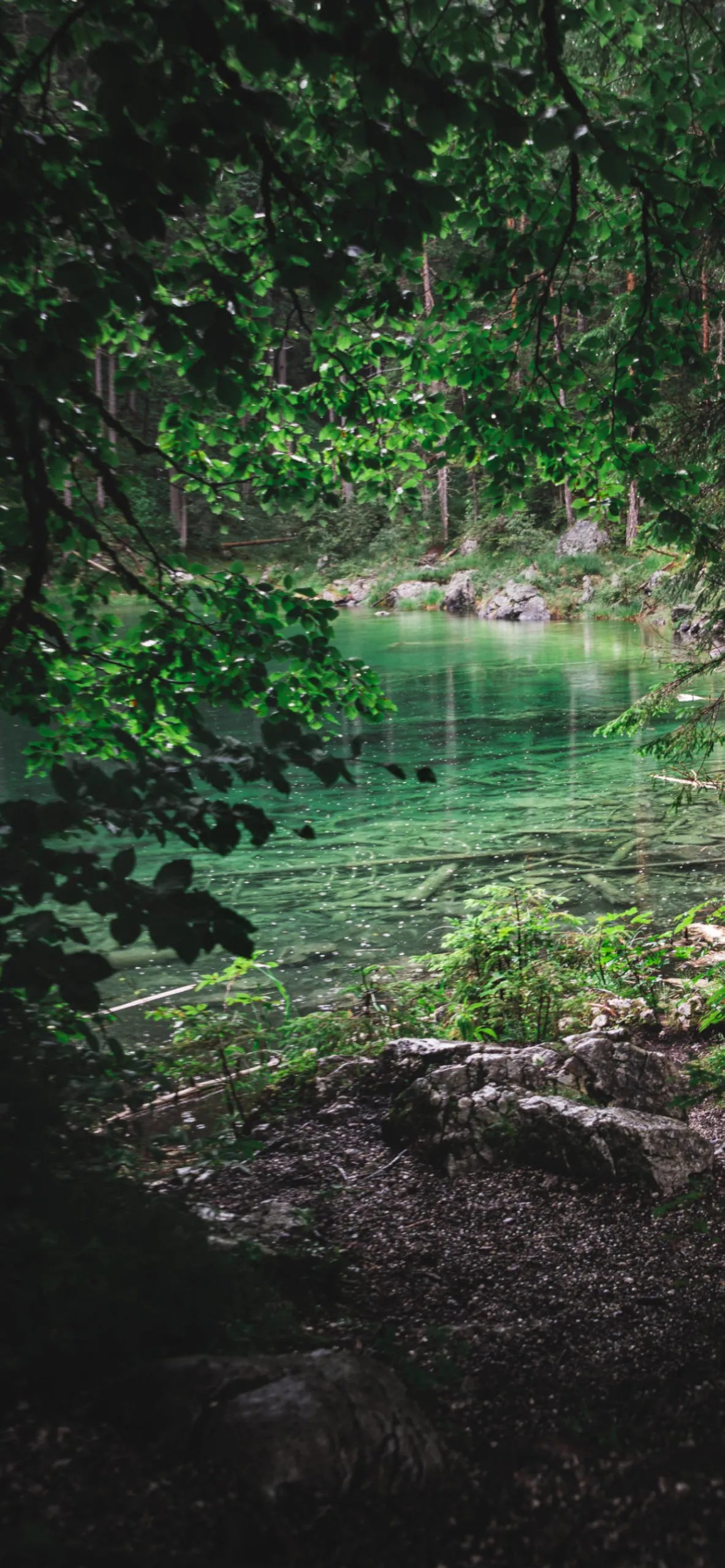 iPhone wallpapers forest river eibsee scaled Forest