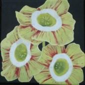 Auriculas by Helen Norfolk, Acrylic on Canvas, 20cm x 20cm