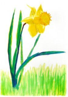 Daffodil by John Dawson