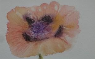 Small Poppy by Helen Norfolk, Watercolour on Paper, 14cm x 9cm