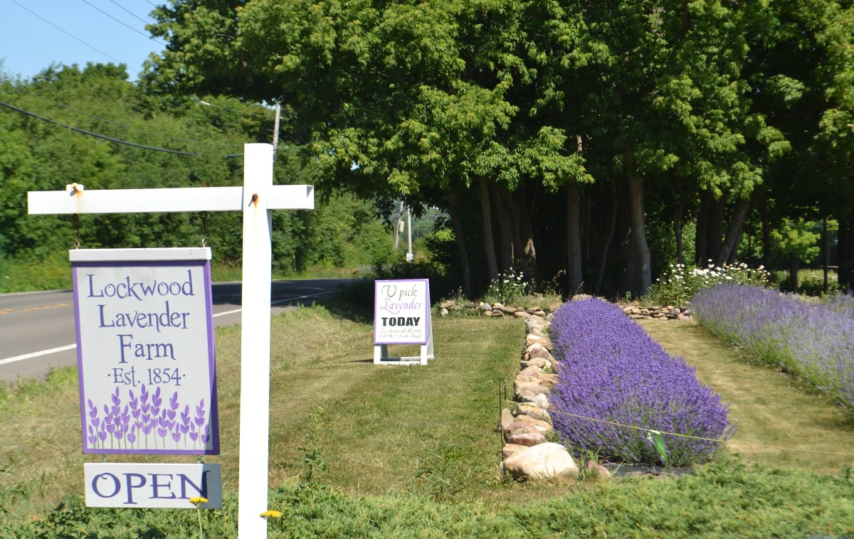 Lockwood Lavender Farm, Skaneateles