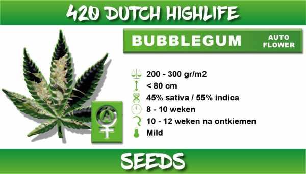 Bubbelgum Autoflower