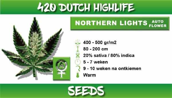 norther light autoflower