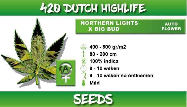 northern lights big bud