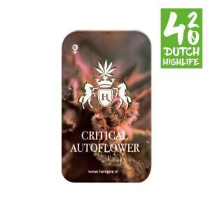 Super Silver Haze 420 Dutch Highlife Wietzaden