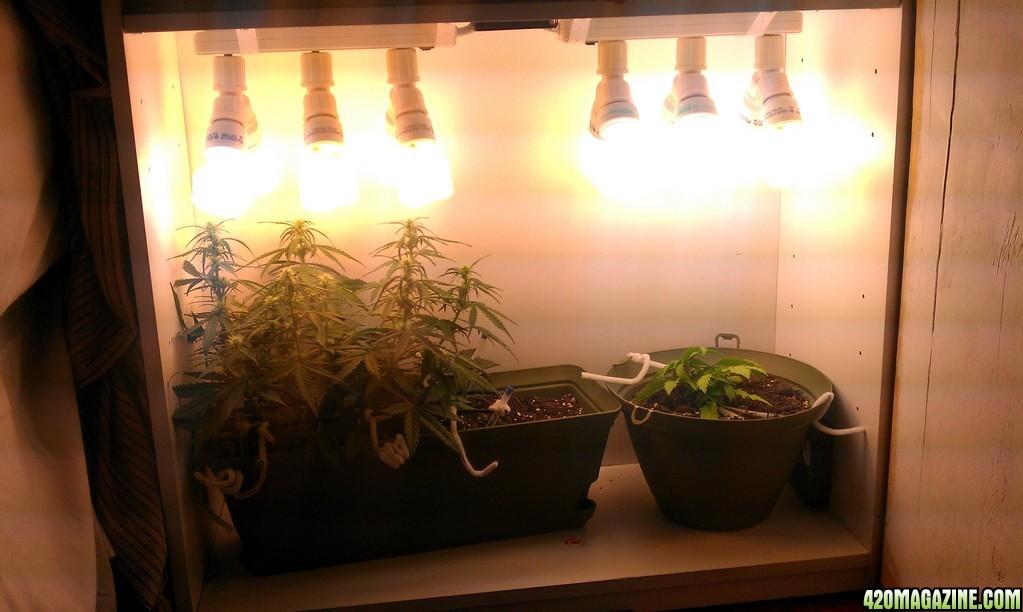 Northern Light Grow Box