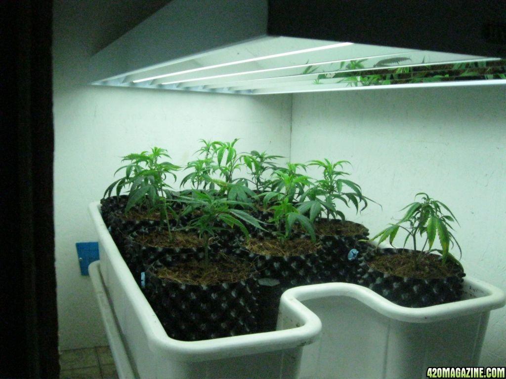 Best Grow Light Bulb