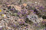 DV Views flowers Valley_0006