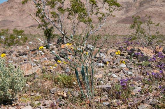 DV Views flowers Valley_0008