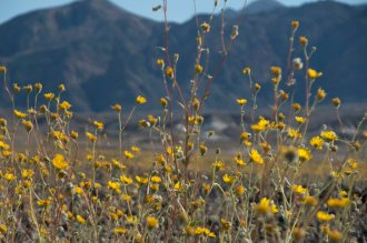 DV Views spring Flowers_0032