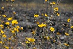 DV Views spring Flowers_0042