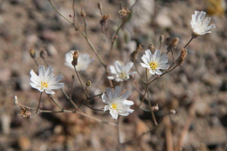 DV Views spring Flowers_0087