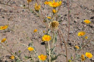 DV Views spring Flowers_0109