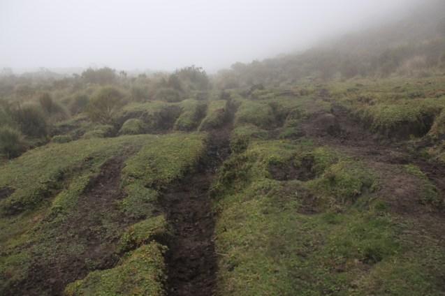 The trail through the páramo.