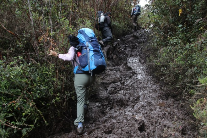 We are basically destroying the cloud forest in an effort to avoid drowning in calf-to-hip-deep mud.