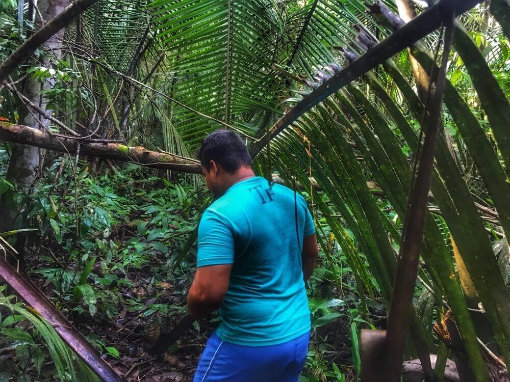 Dense undergrowth in the Amazon of Brazil