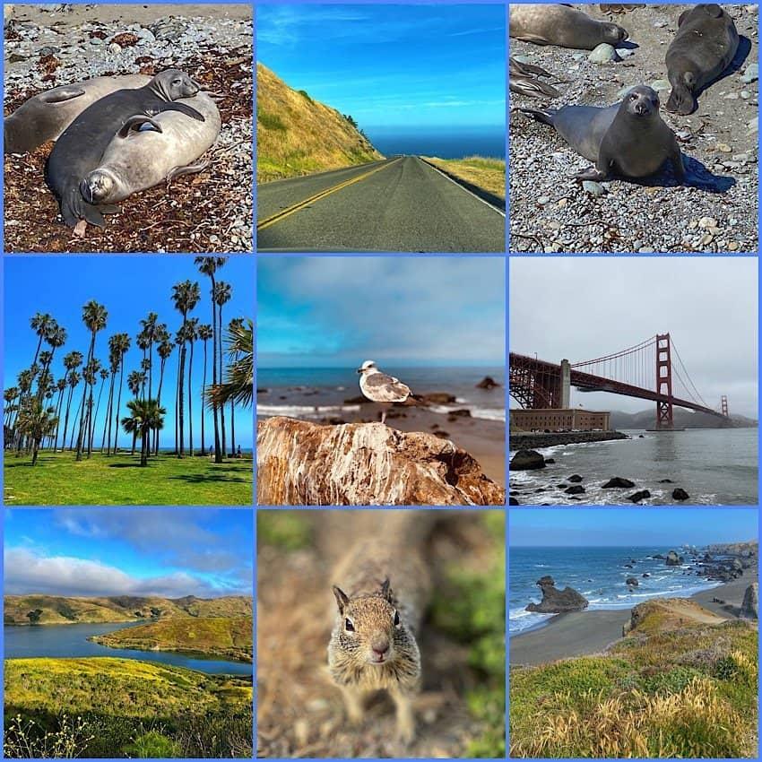 Animals and coastline of California