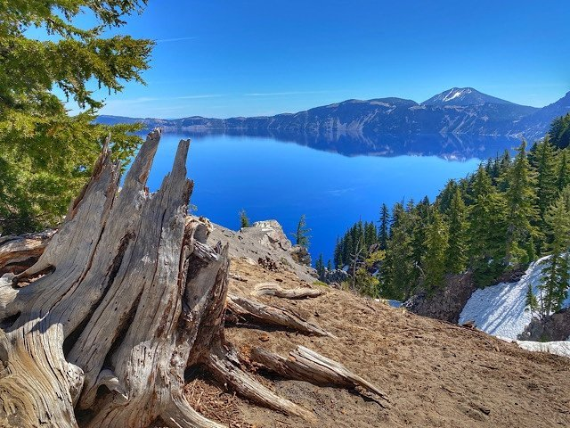 Stump by Crater Lake