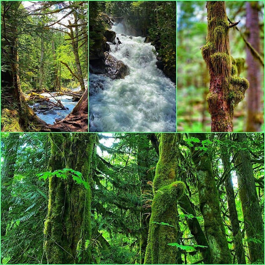 Moss, river, and waterfalls in the Washington Rainforest