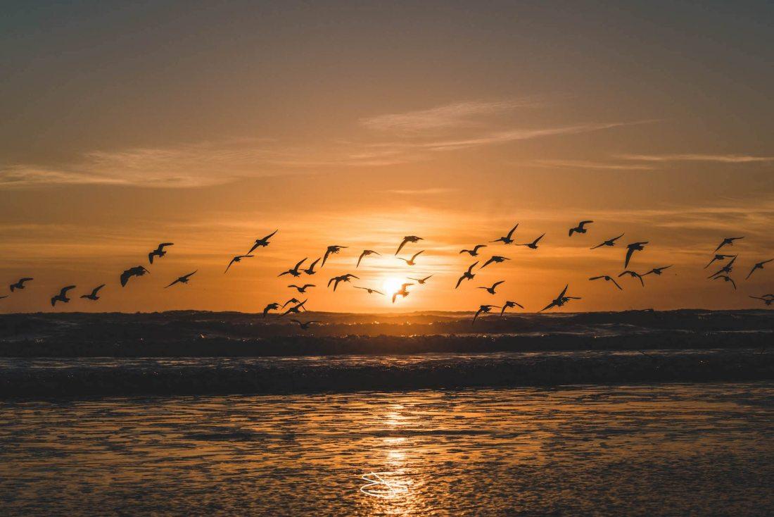 """Birds, sunset, nature."" Photo: Jake Landon, @jakelandon. #SFGuide Featured Photographer."