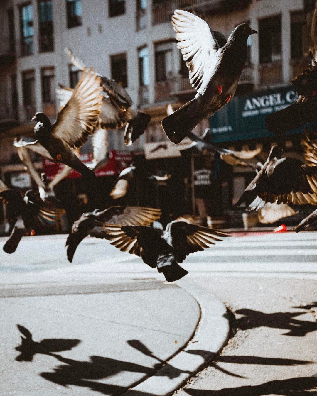 Photo: @viceth_vong, #SFGuide Contributor.