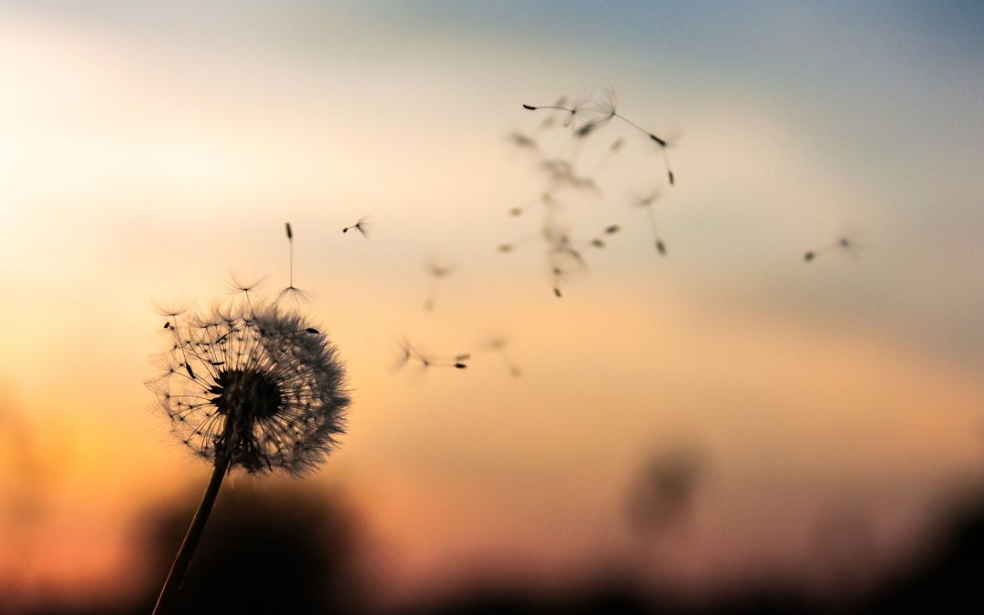 How Can I Heal From Resentment And Move On?