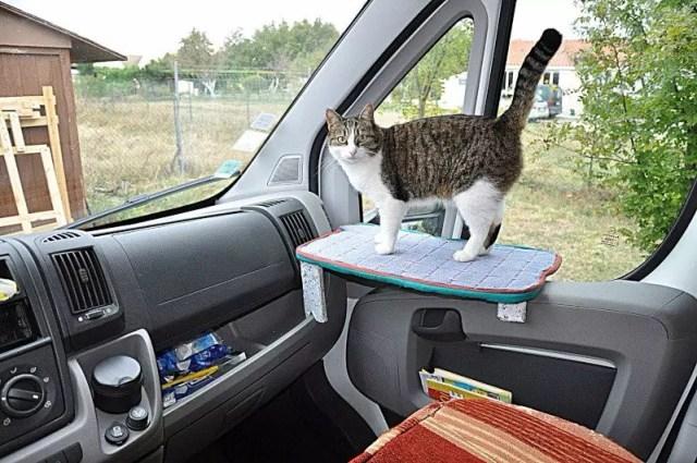 Voyager avec des chats en Camping-Car
