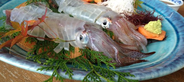 佐賀県呼子のイカを食べるなら「漁火」がおすすめ