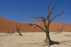 Namibië - Deadvlei