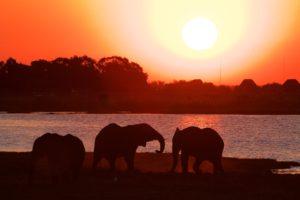 Olifanten olifanten en nog eens olifanten