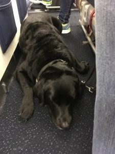 Foto da Hilary deitada no chão do avião